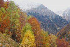 Eylie en automne